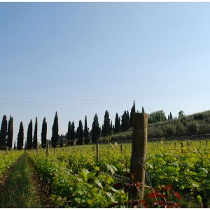 In Valpolicella among ancient villas and the fragrance of Amarone